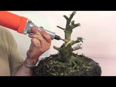 bonsai tree lessons  bonsai tree