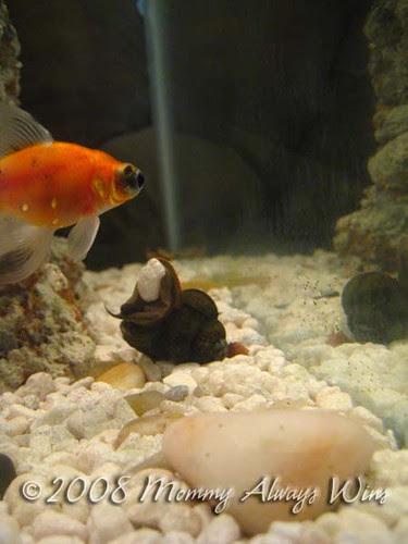 more weird snail