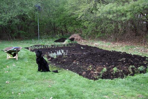 preparing mom and dad's garden  252