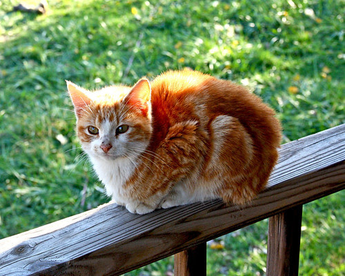 Belle's favorite cat spending time on the porch railing.