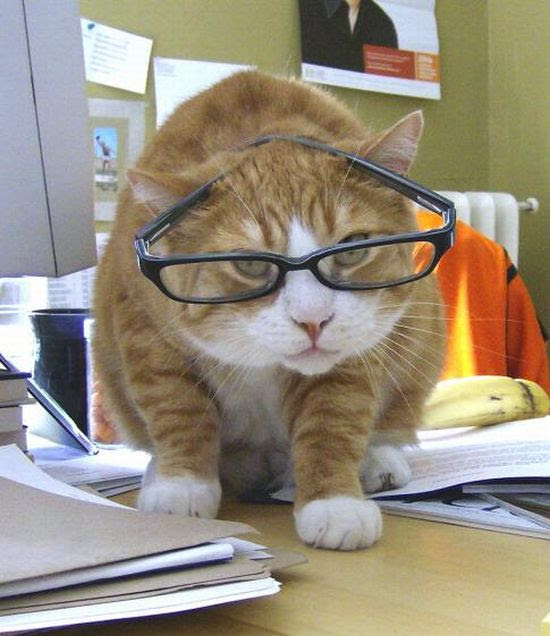 Animals with Glasses (24 pics)