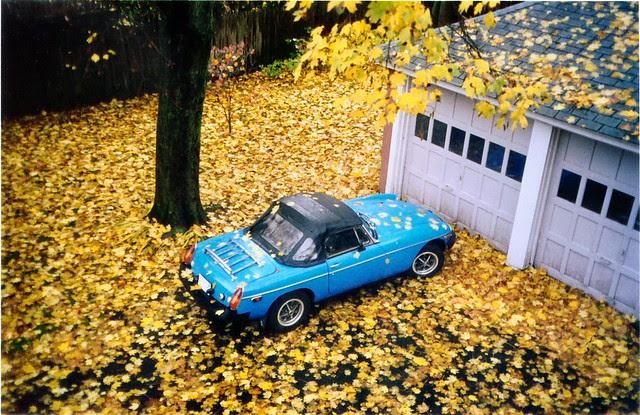 MGB in leaves
