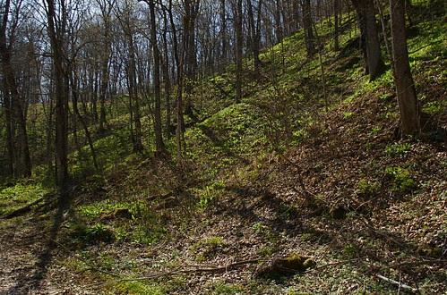 May Day Hillside 1
