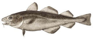 Ikan Kod Buah Vitamin A