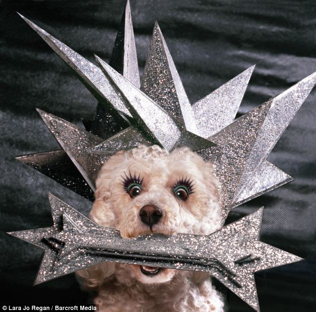 Spiky: Max the dog modelling a design worn by Lady Gaga