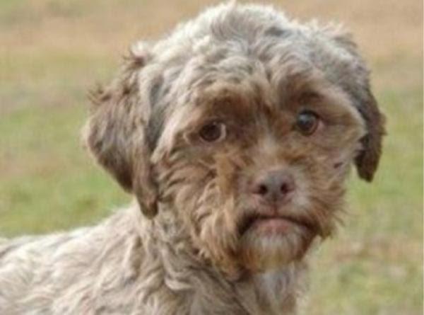 実写版妖怪ウォッチの人面犬 犬へのボケ47309092 ボケてbokete