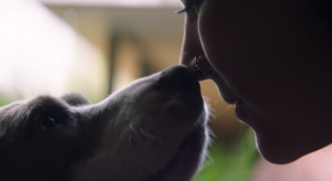 Short Film Gives A New, Unique Look At The Land Of The Strays