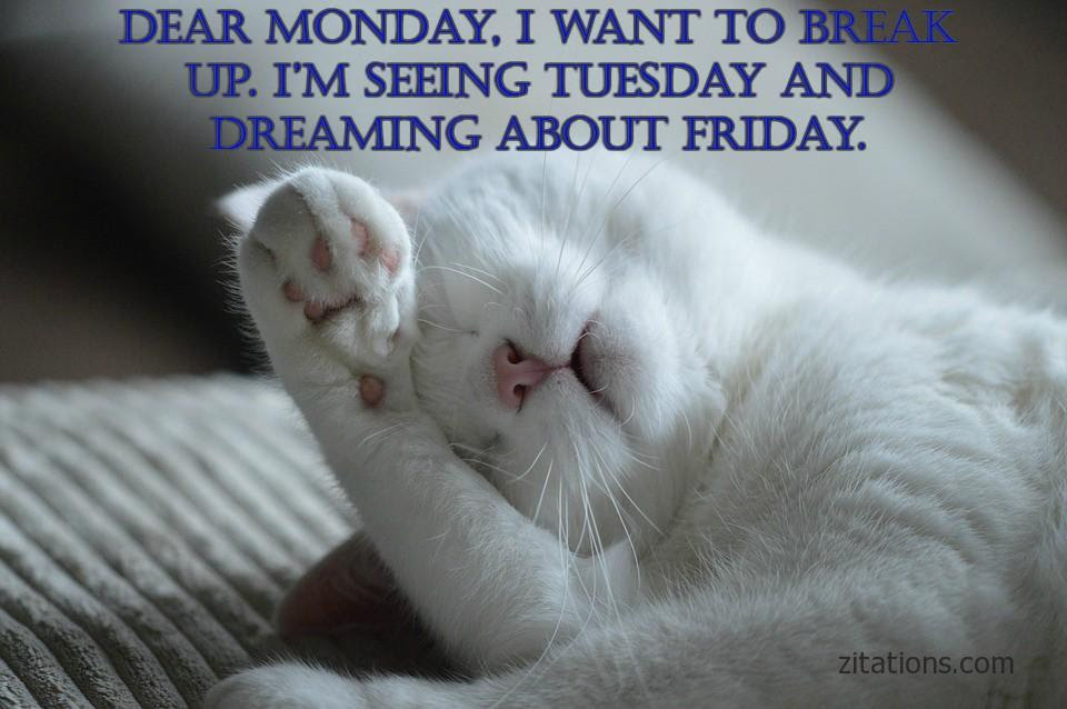 Funny Monday Morning Quotes To Cure The Monday Blues Zitations