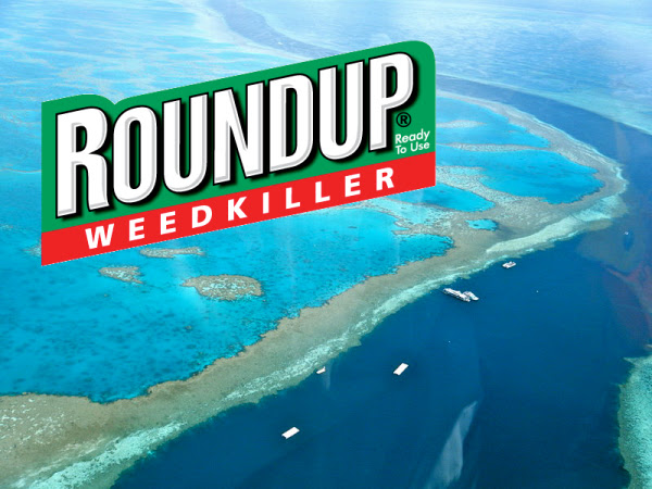 Roundup 'Weed Killer' Threatens Coral Reefs, Persists In Seawater