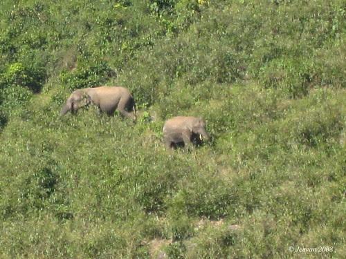 Couple of elephants