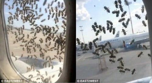 Hình ảnh Hàng nghìn con ong tấn công máy bay chở khách tại Nga số 2