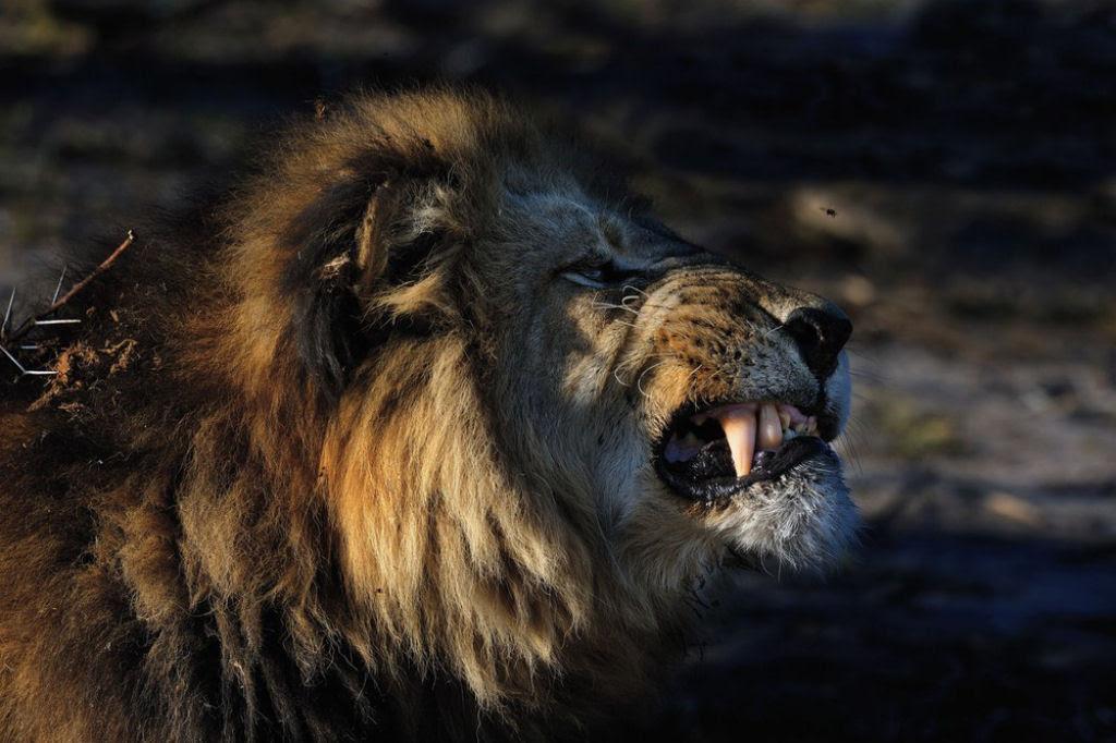 O lado colorido da África selvagem por Alex Bernasconi 16
