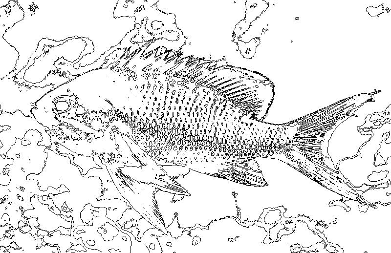 Fourcolormapcom 自動で四色問題を解くソフト 魚とリスの塗り絵