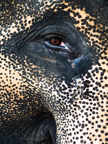 ELEPHANT por BoazImages