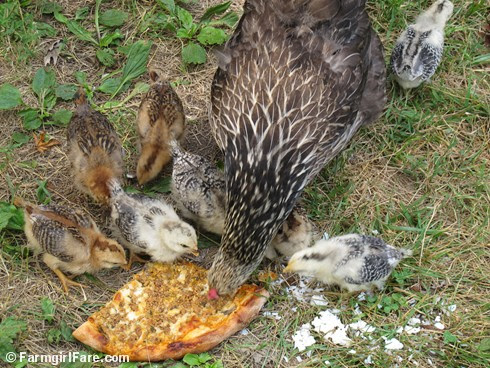 (11) Pizza party! - FarmgirlFare.com