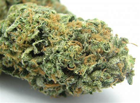 Best Marijuana Strains: Sunset Sherbet ? The Most Hyped