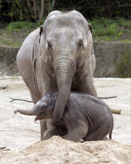 Jugando con mamá