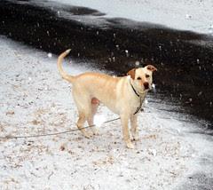 Zeus_snow_31208