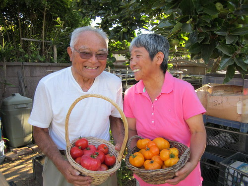 Mom and Dad and Tomatoes