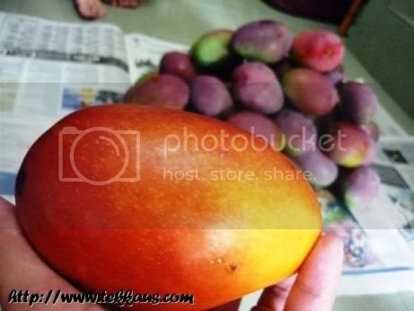 Bloody Mangoes ~You Are So Damn Delicious!