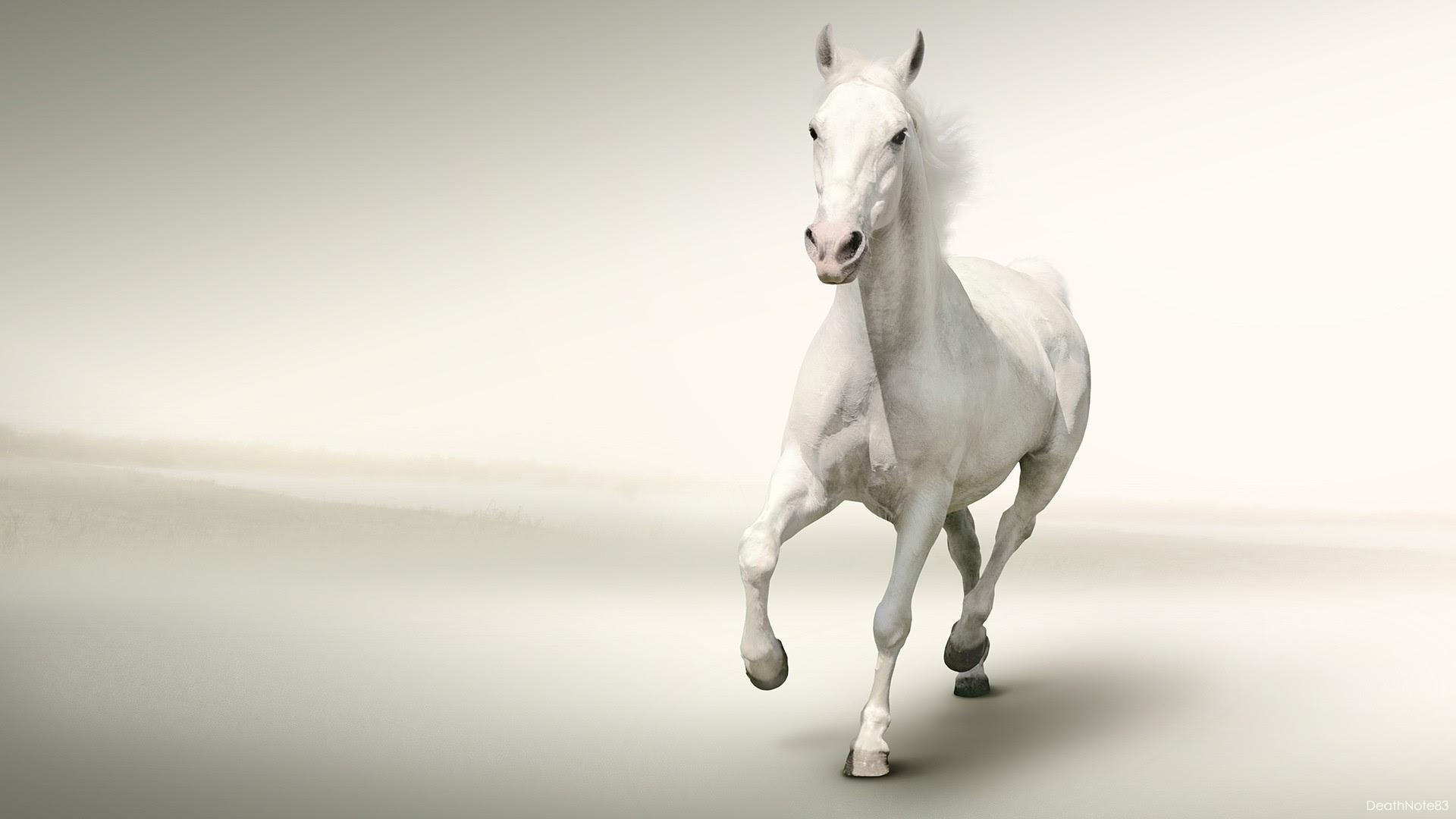 White Horse Full Hd 7 Horse Hd ...