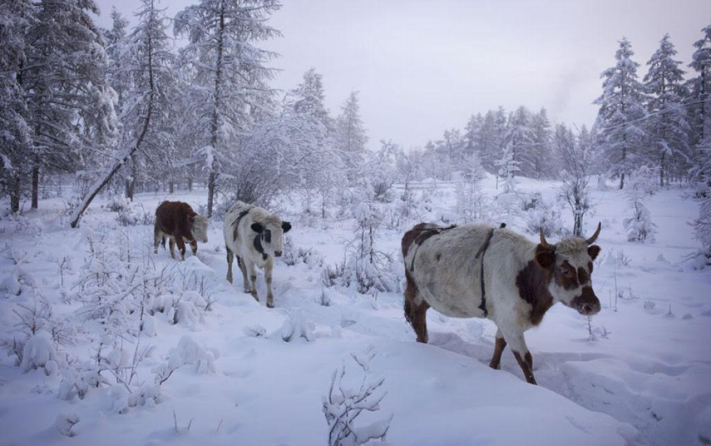 Conheça Oimekon, o povoado mais frio do planeta 12