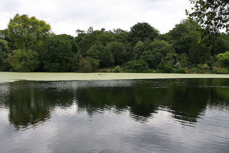 File:Hampstead Ponds (171329664).jpg