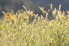 bright-grass