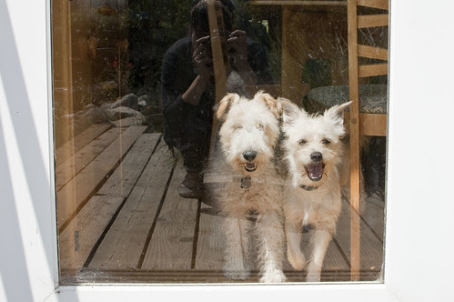 dogs in exile