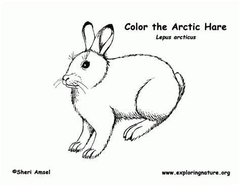 arctic coloring page coloring home