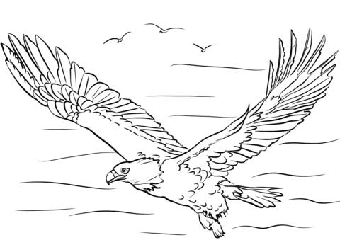 Disegni Da Colorare Aquila Fredrotgans