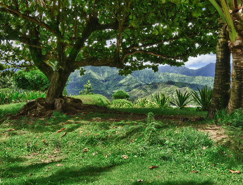 HDR Reveals Detail in the Shadows, Kauai Ficus Tree