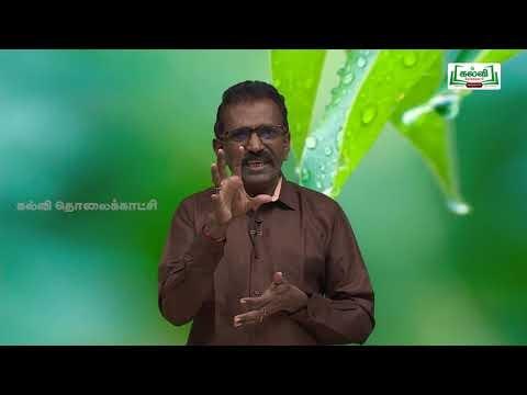 NEET Bio Botany Plant  Anatomy Kalvi TV