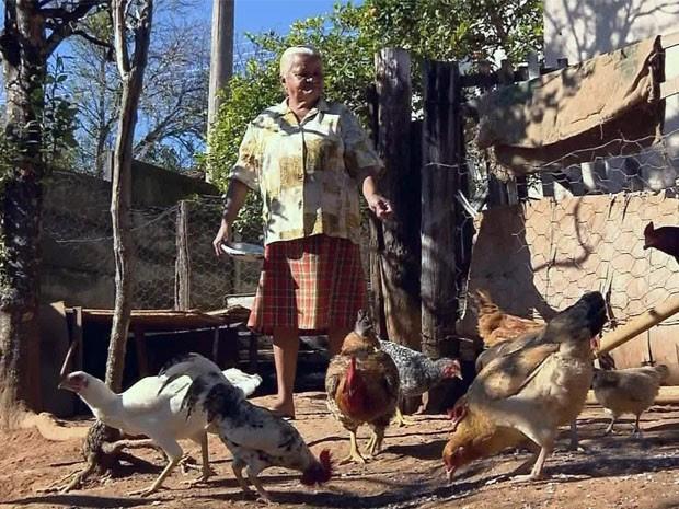 Lei proíbe criação de galinhas na área urbana em Muzambinho, MG (Foto: Reprodução EPTV)
