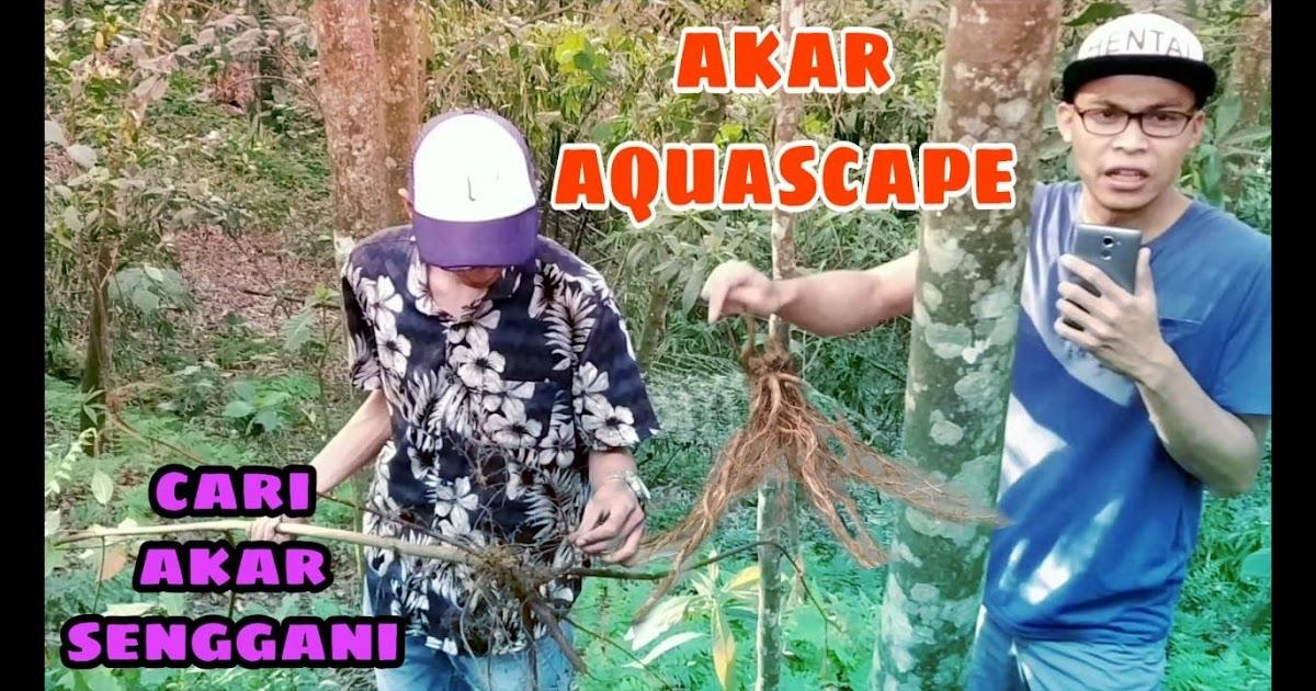 Mencari Akar Untuk Aquascape - AKARKUA