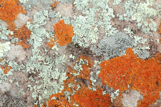 I lichen this color combo ;-)