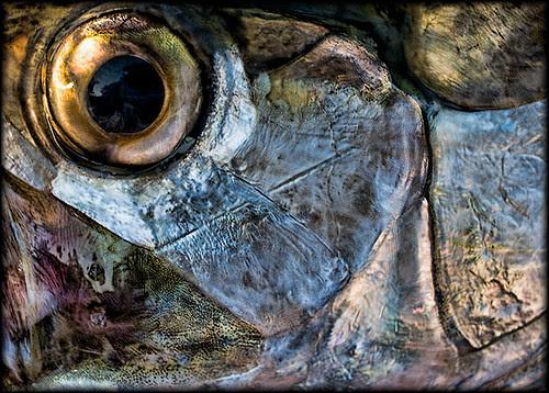 brett-colvin www.flytowater.com