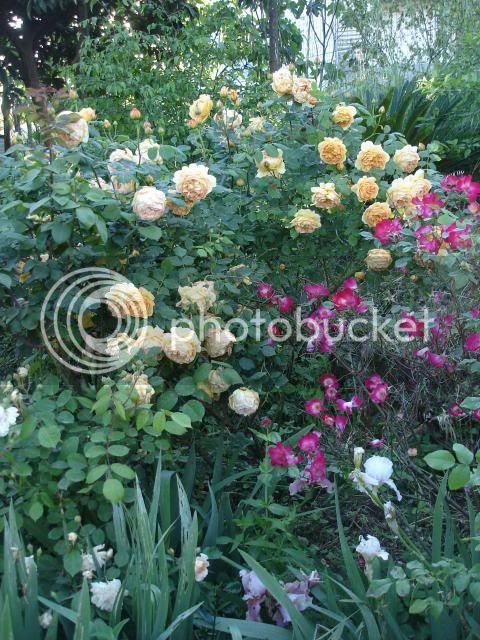 photo giardinoDSC05663.jpg