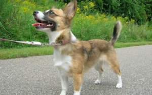 """4 """"Bad Dog"""" Behaviors You Might Be Accidentally Encouraging"""