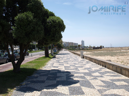Avenida da praia da Figueira da Foz com árvores. Beach front of Figueira da Foz with trees