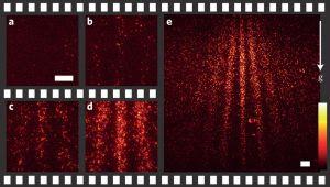 Jedes einzelne Molekül fluorisziert und wird zum Teil des Interferenzmusters.  Die Bilder a)-e) zeigen den Zustand jeweils nach 0, 2, 20, 40 und 90 Minuten.  (Bild: T. Juffmann et al, DOI: 10.1038/NNANO.2012.34)