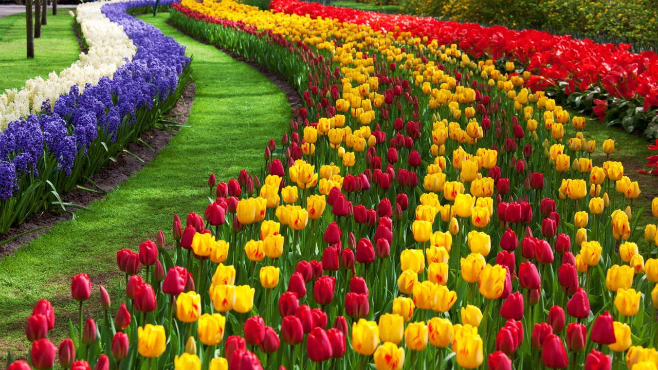 Flowers Pictures Inspirational Flower Images Wallpapers