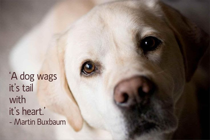 21 Quotes That Will Change The Way You Think About Labradors