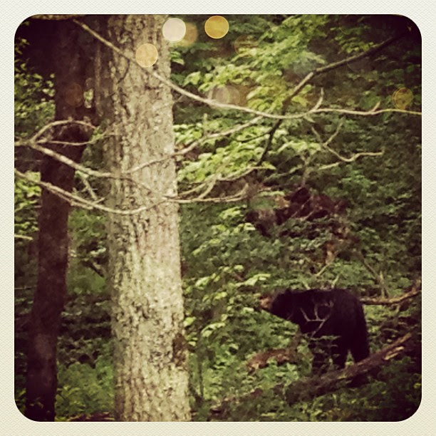 We saw a bear! Her cub was up in a nearby tree.