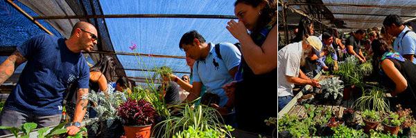 curso-jardines-verticales-chile-prueba
