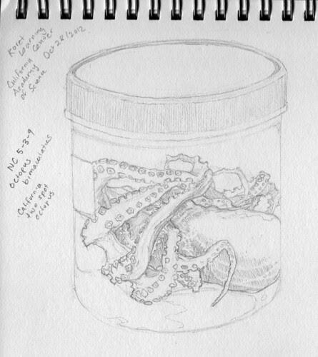 Octopus in a Bottle