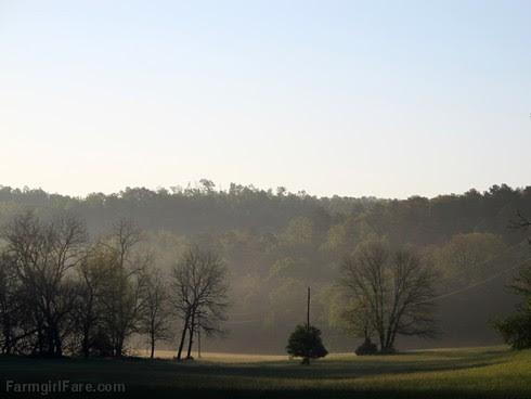 (26-10) Early morning in the hayfield - FarmgirlFare.com