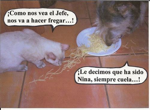 Perras y gatos 001