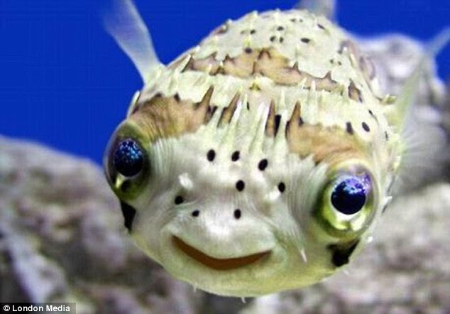 Some-fin funny?: Even the littlest fish finds something to laugh about