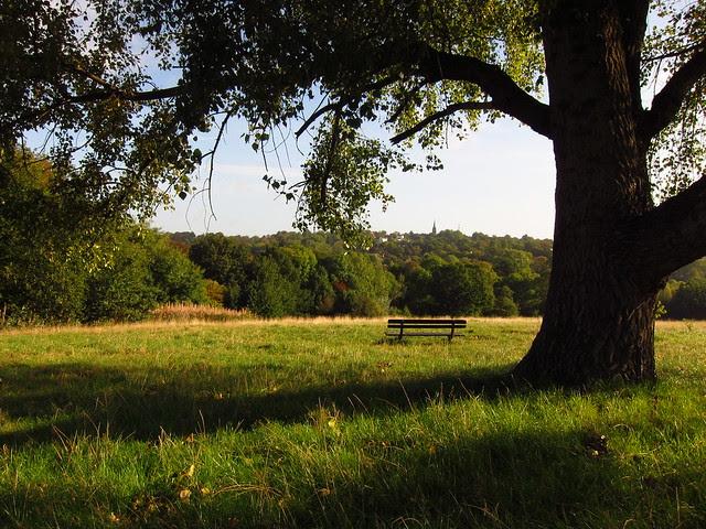 Little Tumulus Field